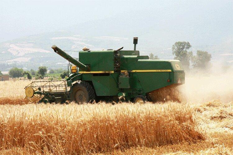 رشد اقتصاد طلایی گندم در مازندران