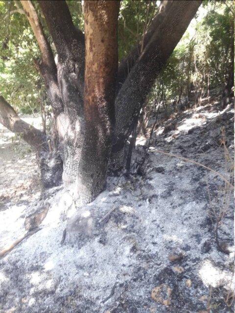 مهار کامل آتش سوزی جنگل های کوه مورد پس از 3 روز