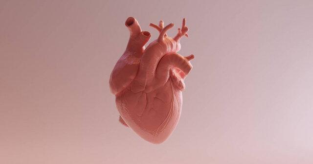 شناسایی یک سلول جدید که به درمان جراحت قلب یاری می نماید