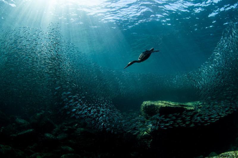 برندگان مسابقه عکاسی Audubon 2020