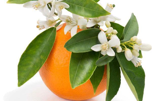 طرز تهیه رب نارنج